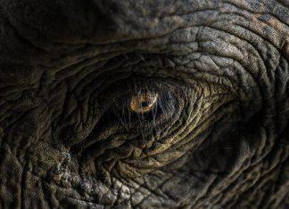 Foto©Charith - stock.adobe.com