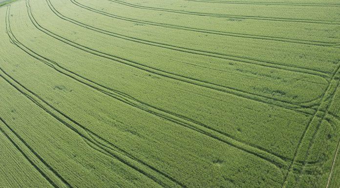 Erde wird grüner (Foto © Markus Breig, KIT)