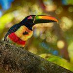 AMAZONICA - Foto (c) Martin PELANEK - stock.adobe.com