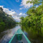 AMAZONICA - Foto ©Fotos 593 - stock.adobe.com