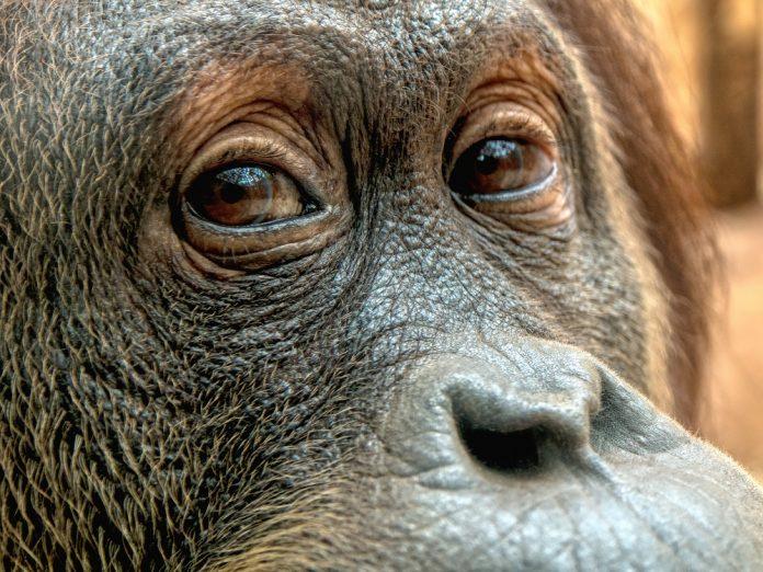Foto © Jens Ackermann - stock.adobe.com
