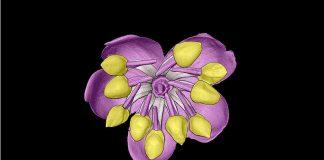 Blütenleben - Foto Uni Wien